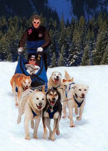 dogsled banffadventures 216x300 Winter Activities in Banff