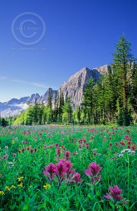 wildflowers 195x300 Summer Activities in Banff, Alberta